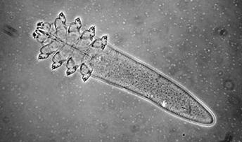Demodex vizsgálat - élősködő is okozhatja a bőrpírt